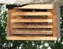 Šikšniukų mažylių veisimosi kolonija daugiakameryje inkile