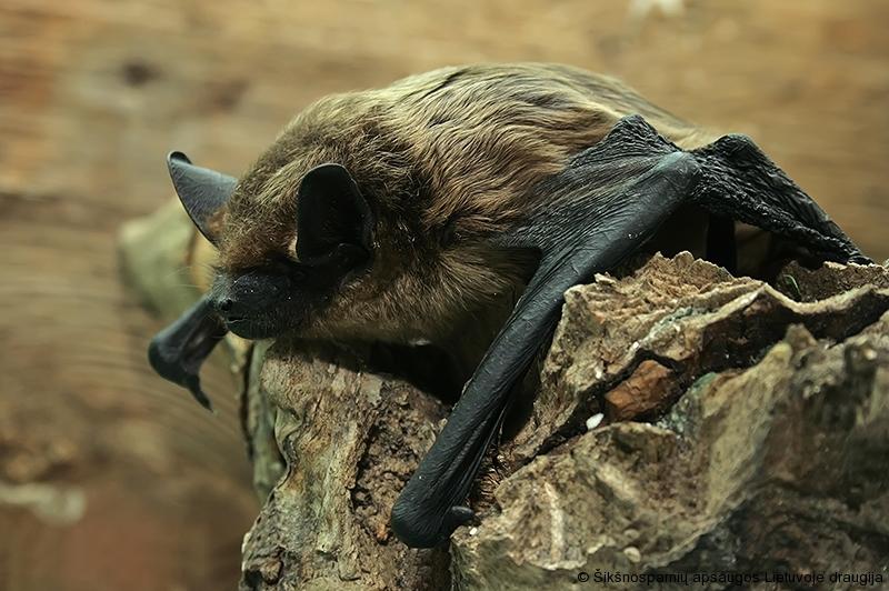 geresnės alternatyvios prekybos sistemos šikšnosparniai grynasis skatinamųjų akcijų pasirinkimo sandorių naudojimas